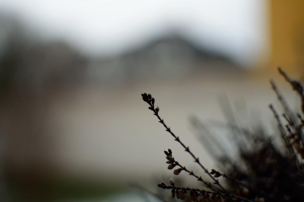 Garten_00009